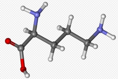 The Benefits of L-OrnithineHGH facts and review of Anti